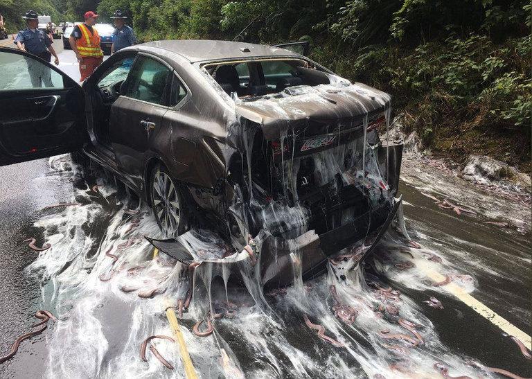 Animal - Truck Spills